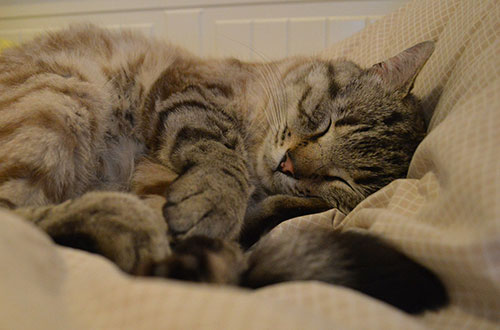 cat-sleeping