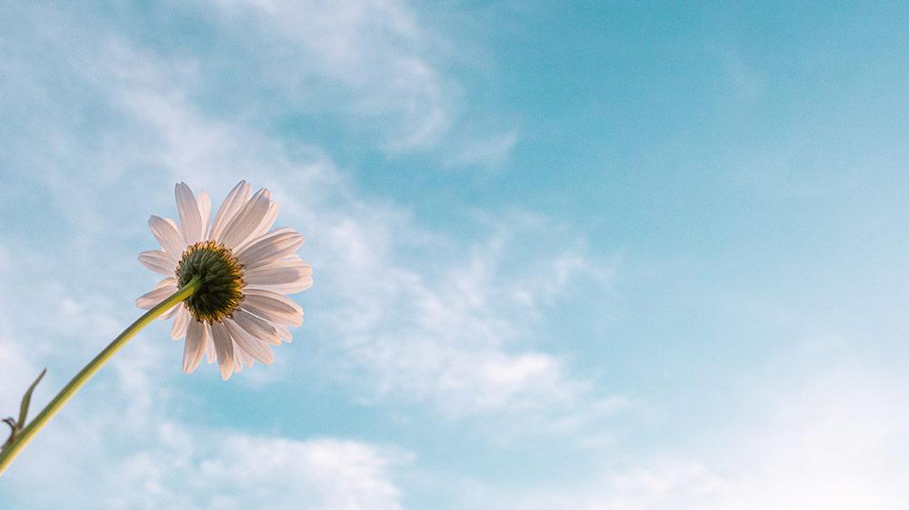 Foto einer Blume, die in den Himmel wächst als Zeichen der Hoffnung dass wir uns nicht unterkriegen lassen